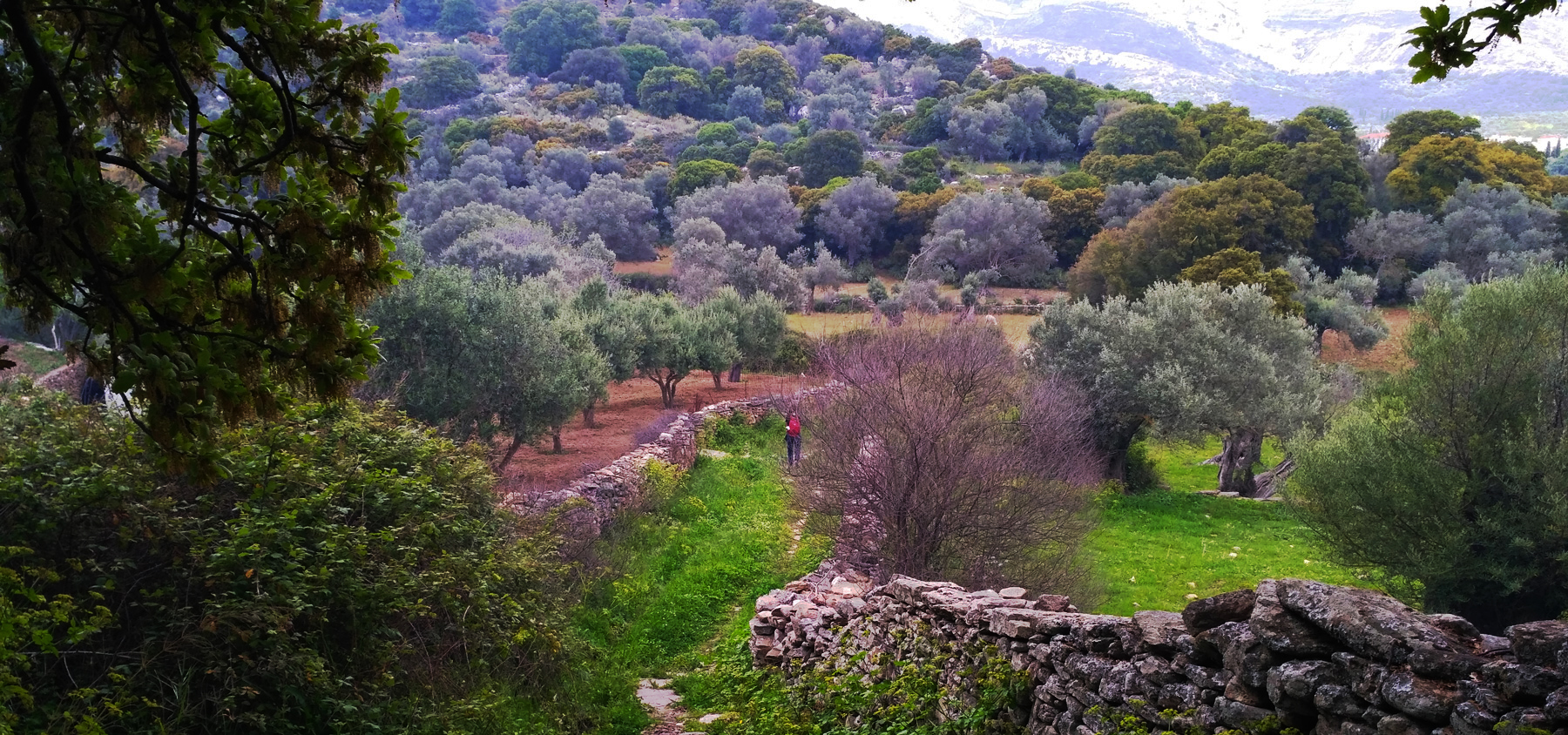 Homepage-slider-In-the-countryside-of-Naxos