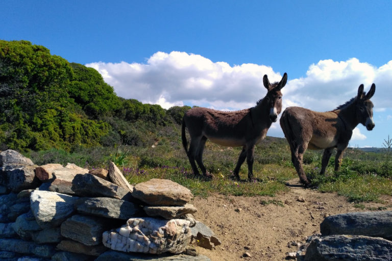 Donkeys-at-Potamia-village-Naxos